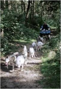 trainen_met_honden[1]